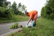 Werkhofleiter Aldo Ringger entfernt in Kradolf einen Staudenknöterich. (Bild: Hannelore Bruderer)