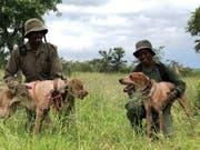 Precious (links) und Pleasure mit zwei Spürhunden, welche immer öfters beim Aufstöbern der Wilderer im südafrikanischen Dschungel eingesetzt werden.
