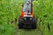 Ein Arenenberg-Mitarbeiter schneidet die Wiese zwischen den Reben. Auf Herbizide wird möglichst verzichtet. (Bild: Silvan Meile)
