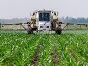 Es wird auch in der Landwirtschaft eingesetzt: Die im Unkrautvernichtungsmittel Roundup enthaltene Chemikalie Glyphosat verursachte bei Labortieren Tumore. (Bild: KEYSTONE/AP/SETH PERLMAN)