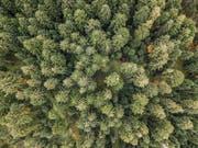 Der Wald dient dem Menschen unter anderem als Erholungsraum. Im Kanton Luzern macht der Wald rund 27 Prozent der Gesamtfläche aus. (Bild: Pius Amrein, Ruswil, 23. Oktober 2017)