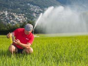 Betriebsleiter Markus Giger überwacht die Bewässerung eines Reisfeldes im Maggia-Delta bei Ascona, aufgenommen am 1. Juli 2018. (Bild: Keystone/TI-PRESS/SAMUEL GOLAY)