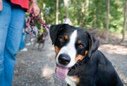 Die Polizei mahnt Hundebesitzer zur Vorsicht. (Keystone)