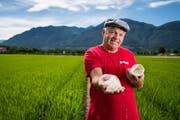 Markus Giger, Landwirt und Projektverantwortlicher für den Reisanbau, zeigt Reiskörner in einem Loto-Reisfeld im Maggia-Delta. (Bild: Alessandro Crinari/Keystone (Ascona, 6. Juli 2018))