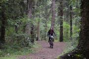 Der Wald ist der ideale Ort, um die Batterien wieder für den stressigen Alltag zu füllen. (Bild: Jessica Nigg)