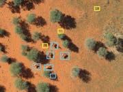 Eine mit künstlicher Intelligenz analysierte Luftaufnahme: Tiere sind blau eingerahmt, gelb gekennzeichnet sind Landschaftselemente. (Bild: Wageningen University/Devis Tuia)