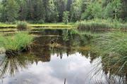 In einer Waldlichtung des Kernwaldes befindet sich ein idyllisches Moorseelein: der Gerzensee. (Bild: Patricia Helfenstein-Burch (Kerns, 11. Juli 2018))