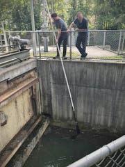 Die Rettungsaktion mit einem verlängerten Kescher. (Bild: Stadtpolizei St.Gallen)