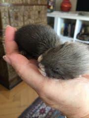 Am Anfang hatten die Tiere Platz in einer Hand. (Bild: PD)