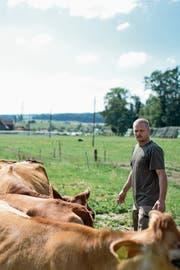 Martin Schuler züchtet auf seinem Hof Jersey-Rinder. Auf der Weide im Hintergrund soll eine Halle von riesigen Ausmassen entstehen. (Bild: Maria Schmid (Drälikon, 11. Juli 2018))
