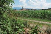 Sicht vom Rand des Bolwaldes Richtung Sins und in die Berge. (Bild: Cornelia Bisch (25. Juni 2018))