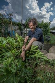 Federico Frongillo setzt beim Anbau auf Bio. (Bild: Pius Amrein (Emmen, 4. Juli 2018))