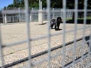 Hunde waren auch 2017 am häufigsten von Tierschutz-Strafverfahren betroffen. (Bild: KEYSTONE/DOMINIC FAVRE)