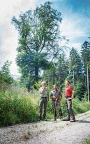 Die 200-jährige Buche im Hörnliwald darf weitere 200 Jahre stehen bleiben; Geri Schwager und Ruedi Lengweiler vom Forstamt unterhalten sich mit Revierförster Stefan Bottlang. (Bild: Andrea Stalder)