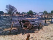 In Nigeria kommt es immer wieder zu tödlichen Überfällen von Viehdieben, wie 2012 in Potiskum im Nordosten des Landes. (Bild: KEYSTONE/AP/Adamu Adamu)