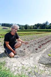 Der Unteregger Guido Buob auf seinem staubtrockenen Salatfeld. Bewässern wird er es dennoch nicht, da bald Regen angesagt ist. (Bild: Rudolf Hirtl)