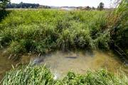 Noch wurden im der Region Werdenberg keine Bewässerungsverbote erlassen. Wegen der Trockenheit dürfen die Bauern im Kanton Thurgau seit einer Woche ihre Felder nicht mehr mit Wasser aus den Bächen und Flüssen bewässern. (Bild: Donato Caspari)