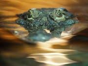 Auf der thailändischen Ferieninsel Phuket wurde ein bis zu drei Meter langes Krokodil im Meer gesichtet. (Bild: KEYSTONE/STEFFEN SCHMIDT)