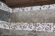Doppelseitige Teppichklebebänder sind wirksam gegen die Tausendfüslerplage. (Bild: Paul Gwerder, Erstfeld, 18. Juli 2018)