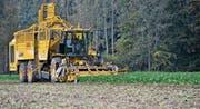 Zuckerrübenernte bei Wellhausen im Thurgau. Der Rübenanbau soll für die Bauern attraktiver werden. (Bild: Reto Martin)