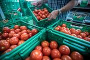 Durch das schöne und warme Wetter wuchsen mehr Tomaten als Konsumenten kaufen. (Bild: Reto Martin, Salmsach, 19. Juli 2018)