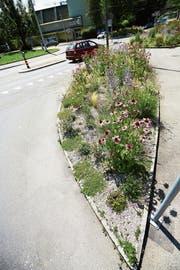 An Luzerns Strassenrändern werden nur einheimische Pflanzen gepflanzt, wie hier in Würzenbach. (Bild: Jakob Ineichen (Luzern, 13. Juli 2018))