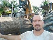 Ramon Wyssen mit seinem Forstschlepper und einem «exzellenten, 13-jährigen Teak-Baum». (Bild: PD)