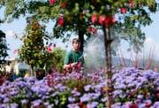 Markus Jiménez von der Stadtgärtnerei bewässert ein Blumenbeet bei der Bushaltestelle Hirtenhof in Luzern. (Bild: Stefan Kaiser (Luzern, 23. Juli 2018))