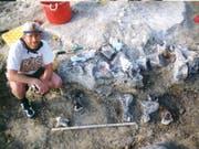 Der Saurierfuss wurde 1998 ausgegraben. Nun ist klar: «Bigfoot» ist ein naher Verwandter der Brachiosaurier. (Bild: KUVP)