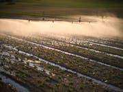 Wegen der anhaltenden Trockenheit müssen quer durch die Schweiz die Felder künstlich bewässert werden. (Bild: KEYSTONE/GIAN EHRENZELLER)