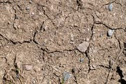 Ausgetrocknete Wiesen wie diese in Langrickenbach sind Folgen der anhaltenden Trockenheit. (Bild: KEYSTONE/Ennio Leanza)