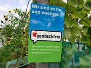 Die EU-Richter in Luxemburg haben am Mittwoch die sogenannte Mutagenese-Methode dem EU-Gentechnikrecht unterstellt. Greenpeace Schweiz und die Schweizer Kleinbauern-Vereinigung fordert nun das Gleiche für die Schweiz. (Bild: KEYSTONE/GAETAN BALLY)