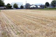 Die Trockenheit macht sich auch auf den landwirtschaftlichen Flächen, wie hier im Choller, bemerkbar. Bild: Werner Schelbert (Zug, 17. Juli 2018)