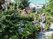 Gaby und Kurt Gerber pflegen ihren Rosengarten mit viel Sorgfalt und Liebe.