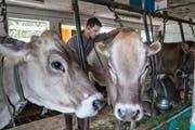 Künftig könnten Nutztierärzte in der Region fehlen. (Bild: Hanspeter Schiess)