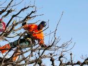 Gärtnerinnen und Gärtner fordern vom Arbeitgeberverband Jardin Suisse einen Mindestlohn von 4000 Franken. (Bild: KEYSTONE/SIGI TISCHLER)