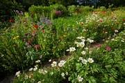 Der Biologe Ewald Weber stellt 25 Pflanzen vor, die sich durch Besonderheiten auszeichnen. (Bild: Ingo Bartussek)