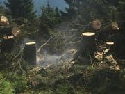 Der Flurbrand wurde durch ein Grillfeuer verursacht. Der Schaden hält sich in Grenzen. (Bild: Kantonspolizei Glarus)