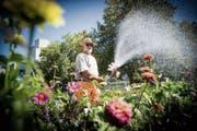 Stadtgärtner Albin Kisling giesst die Blumen im Park auf dem unteren Brühl. (Bild: Ralph Ribi)