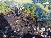 Abgebrannte Föhre auf der Alp Chlus unterhalb der Ebenalp. (Bild: Kapo AI)