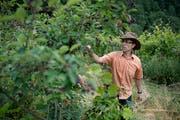 Seine Beerensträucher gelten nicht als landwirtschaftliche Kulturen: Permakultur-Bauer Beat Rölli auf seinem Hof Chuderboden. (Bild: Corinne Glanzmann (Malters, 25. Juni 2018))