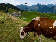 Wegen der anhaltenden Trockenheit wird das Futter auf den Bauernbetrieben knapp. (Bild: KEYSTONE/JEAN-CHRISTOPHE BOTT)