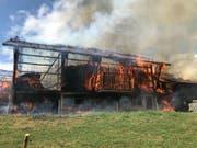 Diese Scheune in Madetswil ZH brannte am Freitag komplett nieder. Die traurige Bilanz: 18 tote junge Stiere und sieben verletzte Personen. (Bild: Kantonspolizei Zürich)