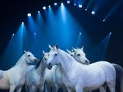 Diese Pferde sehen am Samstag Berner Kinder auch dank Geld aus den Vereinigten Arabischen Emiraten. (Bild: KEYSTONE/MELANIE DUCHENE)