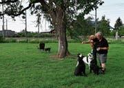 Die Hundefreilaufwiese im Gebiet Choller musste zur Wiederinstandsetzung vorübergehend geschlossen werden. (Bild: Stefan Kaiser (Zug, 4. Juni 2018))