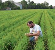 Alles andere als Spinnerei: Erich Leyrer prüft seine Reispflanzen. (Bild: Ulrich Traub)