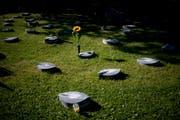 Ein Gemeinschaftsgrab auf dem Friedhof Feldli.