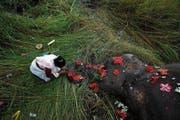 In Panbari, östlich von Gauhati, schmückt eine Inderin einen von einem Zug getöteten Elefanten mit Blumen. (Bild: Anupam Nath/AP)