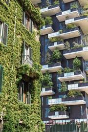In einem Stadtquartier der Zukunft in Mailand: Eine begrünte Fassade und ein «vertikaler Wald» sollen mithelfen, das Klima zu verbessern und die Artenvielfalt zu erhalten. (Bild: Massimiliano Sechi/Getty)