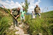 Philipp Amrein (links), Erwin Dahinden und Heinz Stalder (rechts) fangen Fische in einem Bach aufgrund von Wasser- und Sauerstoffmangel und bringen sie in die Kleine Emme. (Bild: Luzerner Zeitung (Schüpfheim, 23. Juli 2018))